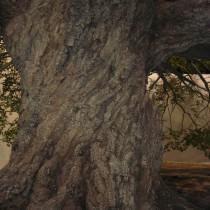 Life Tree set - Plaster casted bark - detail
