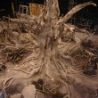 Ancient tree ship set - Top view / Roots and floor in cement and plaster