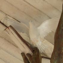 L'Avaleur de Brume 2009 - PROJET PERSONNEL / EXPOSITION DE GROUPE : XIB - Version Libération Paix - Colombe sculptée en argile, moulée et produit en plastique puis peinte à l'acrylique